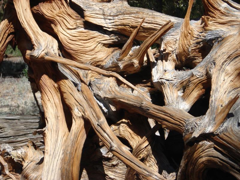 Tree roots_1